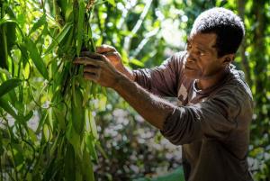Vanilla-Farmer-in-Uganda